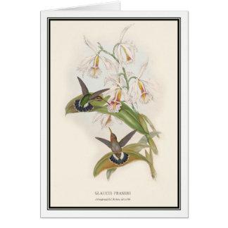 Gould-Richterのヴィンテージの隠者のハチドリ カード