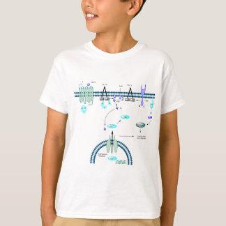 GPCRの細道 Tシャツ