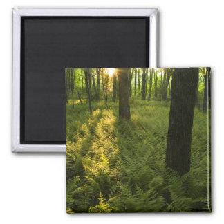 Grafton、マサチューセッツの森林のシダ マグネット