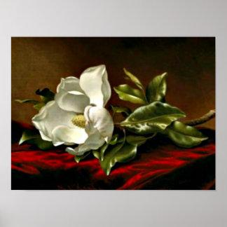 Grandiflora1895マグノリア_MartinジョンソンHeade ポスター