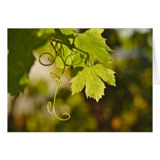 GreetingCard: 地中海のなブドウつる植物 カード