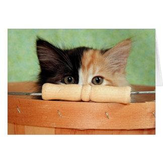 Greyfoot猫の救助のさらさの子ネコカード カード