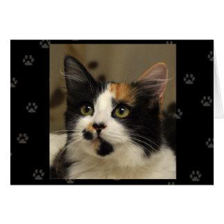 Greyfoot猫の救助のさらさの挨拶状 カード