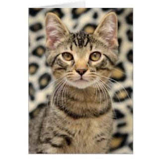 Greyfoot猫の救助のブラウンの虎猫カード カード