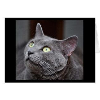 Greyfoot猫の救助のロシアので青い挨拶状 カード
