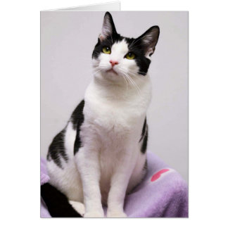 Greyfoot猫の救助の白黒タキシードカード カード