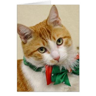 Greyfoot猫の救助の虎猫のクリスマスの挨拶状 カード