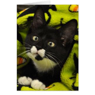 Greyfoot猫の救助のBowtieのタキシードカード カード