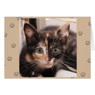 Greyfoot猫の救助のTortieカード カード