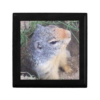 Groundhogのギフト用の箱 ギフトボックス