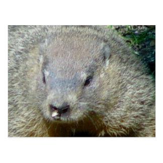 Groundhogの郵便はがき ポストカード