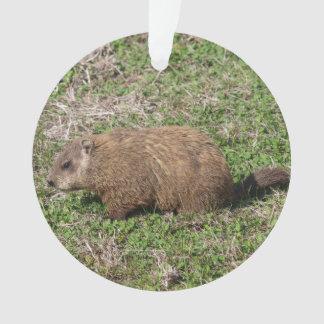 Groundhog オーナメント