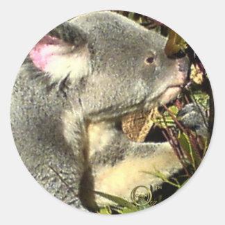 Gumtreeのコアラ ラウンドシール