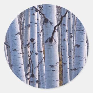 Gunnisonの国立公園の《植物》アスペン ラウンドシール