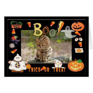 h 103 geoffroy猫 カード