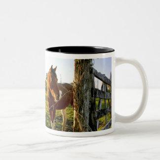 Haast、ニュージーランド。 新しいの馬牧場 ツートーンマグカップ