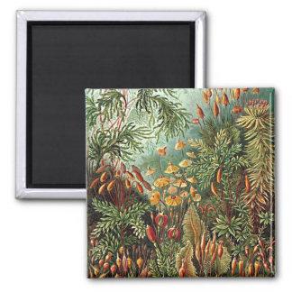 Haeckelのコケの草のきのこの絵画 マグネット