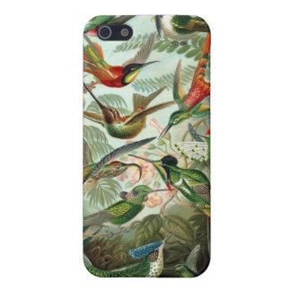 Haeckelのハチドリ iPhone 5 ケース