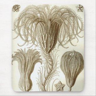 Haeckel マウスパッド