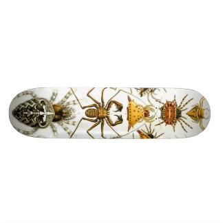 Haeckel_Arachnida オリジナルスケートボード