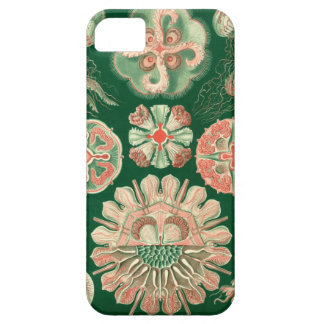 Haeckel Discomedusae iPhone SE/5/5s ケース