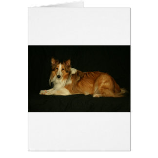 HALEY犬 カード