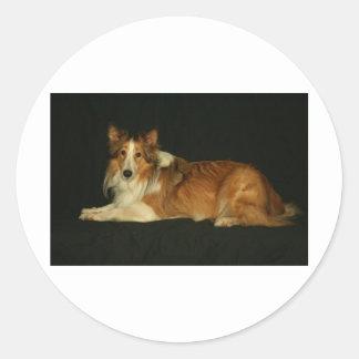 HALEY犬 ラウンドシール