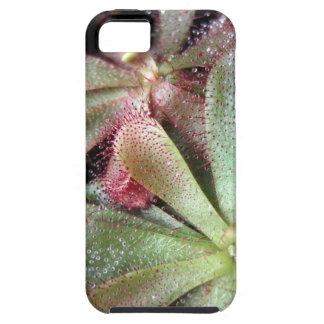 Hamiltons Sundew Pflanzen-Foto iPhone SE/5/5s ケース