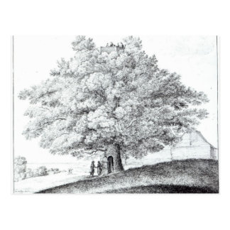 Hampstead 1663年の空木 ポストカード
