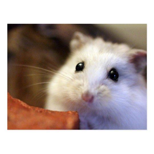 Hamster Postcard ポストカード