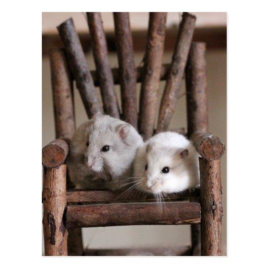 Hamsters Postcard ポストカード