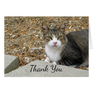 Happy Tabby Thank You Note Card カード