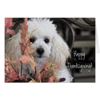 Happy Thanksgiving Poodle dog card カード