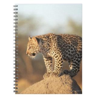 Harnasの自然保護区、ナミビア ノートブック
