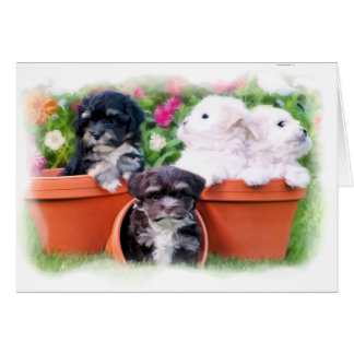 Havaneseの子犬の挨拶状 カード