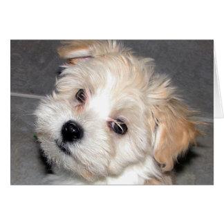Havaneseの子犬 カード
