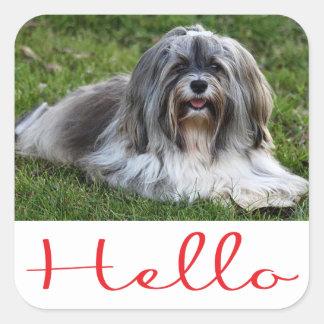 Havaneseの小犬のこんにちはステッカーのシール スクエアシール