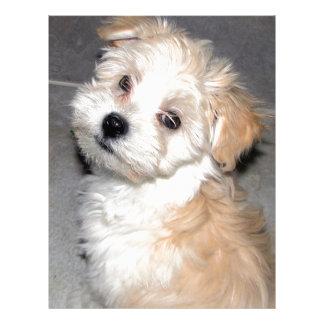 Havaneseの救助の子犬の日焼けの白 レターヘッド