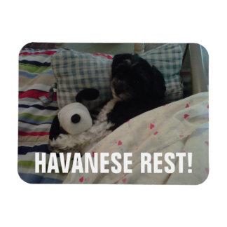 Havaneseの残り! マグネット