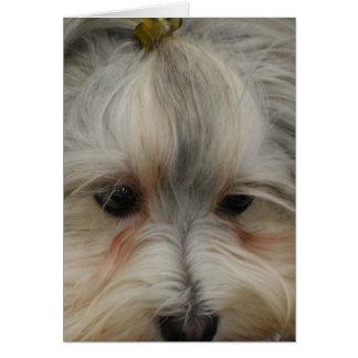 Havanese休息の犬 カード