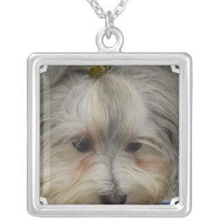 Havanese休息の犬 シルバープレートネックレス