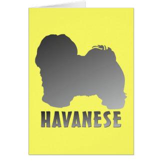 Havanese カード