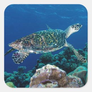 Hawksbillのウミガメのグレート・バリア・リーフの珊瑚海 スクエアシール