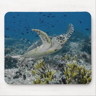 Hawksbillのウミガメの水泳 マウスパッド
