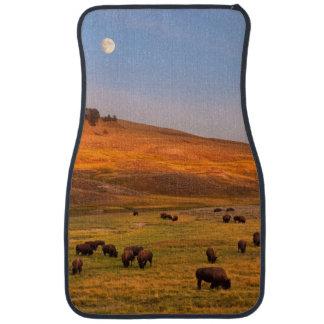 Haydenの谷で丘で牧草を食べるバイソン カーマット