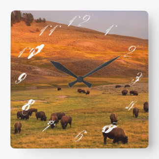 Haydenの谷で丘で牧草を食べるバイソン スクエア壁時計