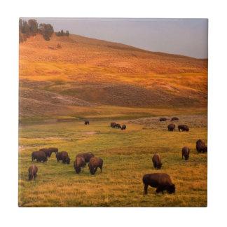 Haydenの谷で丘で牧草を食べるバイソン タイル