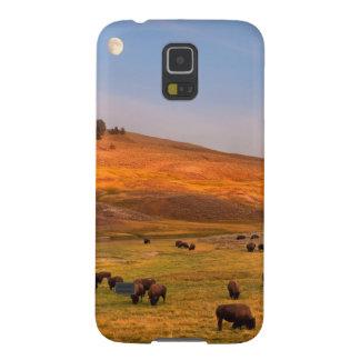 Haydenの谷で丘で牧草を食べるバイソン Galaxy S5 ケース