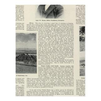 Healdsburg、カリフォルニア ポストカード