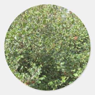 Hednesfordの秋のヒイラギ ラウンドシール
